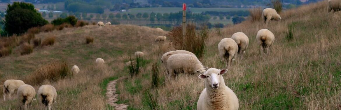 Sustainable choices and strong wool carpet